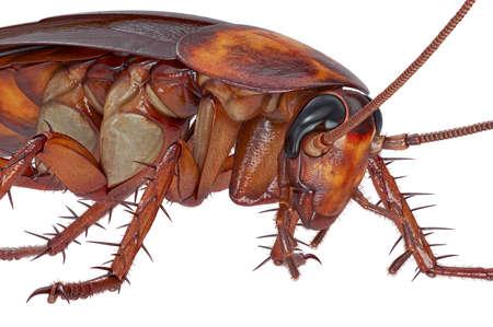 Kakkerlak insect oranje opstandig schepsel, dichtbijzicht. 3D-weergave