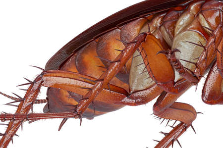Cockroach bug orange roach urban creepy pest, close view. 3D rendering Stock Photo