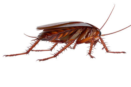 Cockroach bug brown creeping animal. 3D rendering
