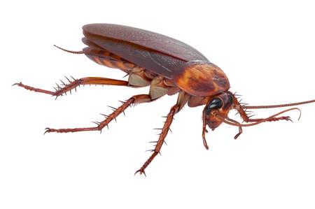 Cockroach bug beetle creepy creature. 3D rendering Stock Photo