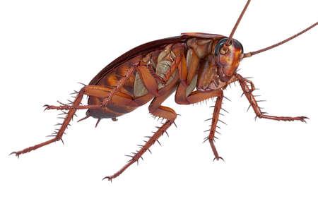 바퀴벌레 버그 생물 더러운 하 고 혐오감. 3D 렌더링
