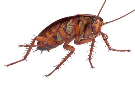 Cockroach bug creature dirty and disgusting. 3D rendering