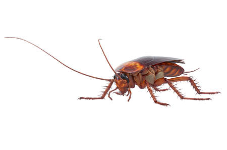Cockroach bug insect brown with antenna. 3D rendering Stock Photo