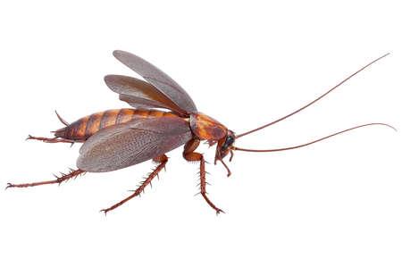 바퀴벌레 버그 곤충 비틀 도시 동물입니다. 3D 렌더링