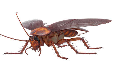 disgusting animal: Cockroach bug insect creature disgusting pest. 3D rendering