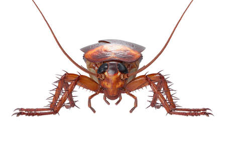 Cockroach bug insect roach creepy and revolting, front view. 3D rendering Stock Photo