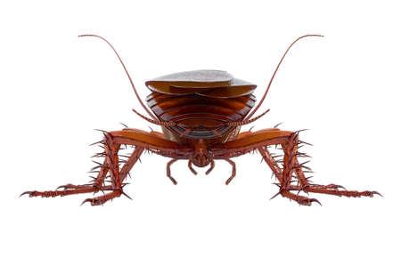 바퀴벌레 버그 갈색 작고 반짝이 딱정벌레, 다시보기. 3D 렌더링