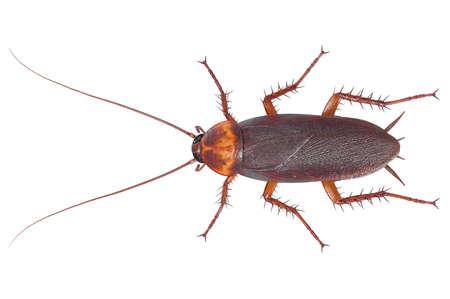 Kakkerlak insect bruine kruipende ziekte plaag, bovenaanzicht. 3D-weergave