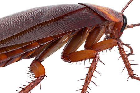 Cockroach bug american creature urban animal, close view. 3D rendering Stock Photo