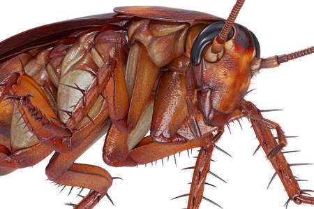 바퀴벌레 버그 오렌지 들어온다 딱정벌레,보기를 닫습니다. 3D 렌더링