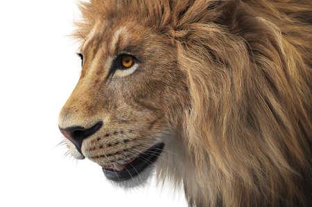 Lion head wild male mammal, close view. 3D rendering