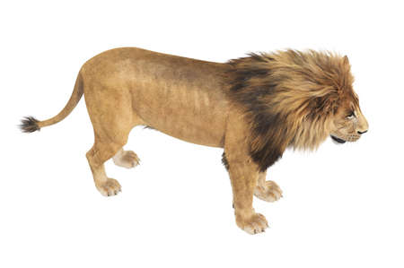 Lion feline young and strong. 3D rendering Stock Photo