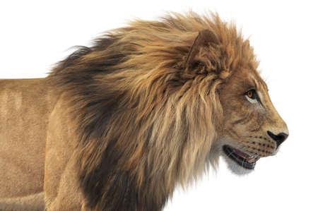 Lion african feline dangerous hunter, close view. 3D rendering