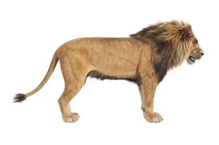Lion african male panthera, side view. 3D rendering Stock Photo