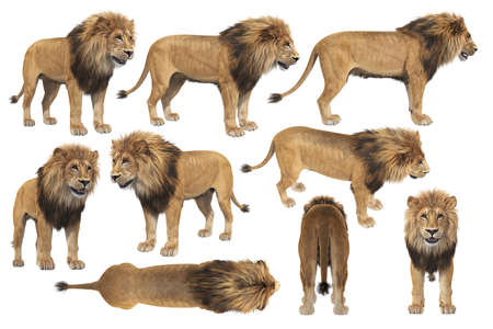African lion with big mane set. 3D rendering