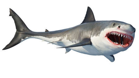 White shark marine predator big open mouth. Isolated background. 3D rendering Archivio Fotografico - 117240506
