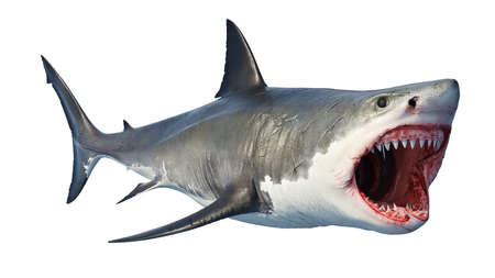 White shark marine predator big open mouth. 3D rendering Stock Photo