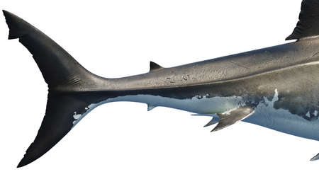 White shark marine big predator tail, side view, close view. 3D rendering Stock fotó