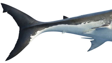 White shark marine big predator tail, side view, close view. 3D rendering Foto de archivo - 117240554