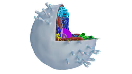 Animal cell in section, multi-colored science biology, side view. 3D rendering