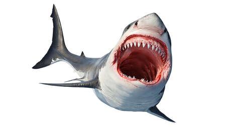 White shark marine predator big open mouth and teeth. 3D rendering