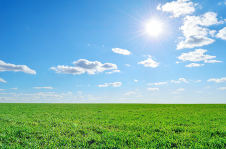 field of lush green grass under a clear sky photo