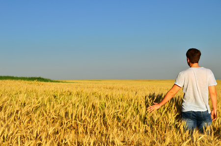 grains: young man looks into the distance in a barley field