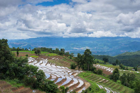 terracing: terraces field Mae Jam, Chiang Mai, Thailand