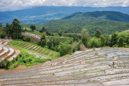 terracing: terraces field in Chiang Mai, Thailand