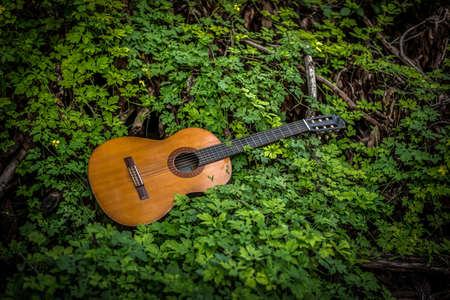classic guitar on wood background with green leaf on vintage tone and vignette style