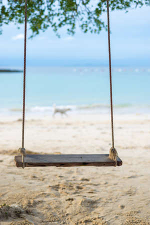 a Swing hang from the tree over beach