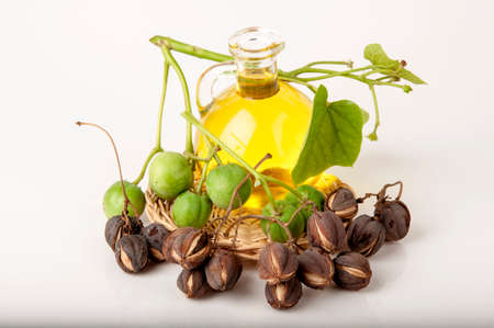 Black Soap, Physic nut, Purging nut, Barbados nut, Kuikui pake, potentially leading to extraction and production of biodiesel.