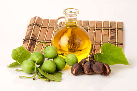 Black Soap, Physic nut, Purging nut, Barbados nut, Kuikui pake, Pignon dinde (Jatropha curcas L.), potentially leading to extraction and production of biodiesel. Stock Photo