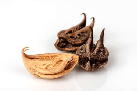 タイガーの爪、悪魔の爪 (Martynia annua L)、種子。
