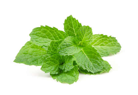 Fresh raw mint leaves isolated on white background with high quality Imagens