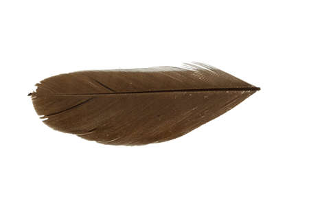 broaching: a brown feather