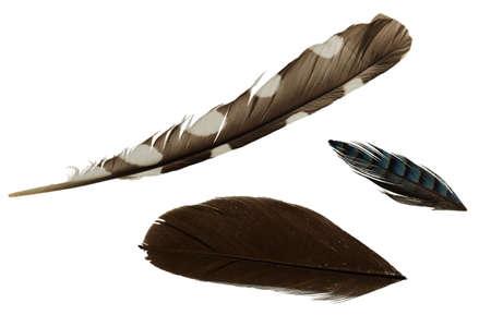 broaching: three feathers