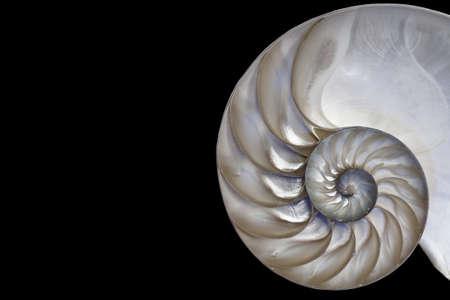 Nautilus shell Fibonacci pattern  photo