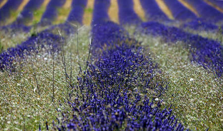 Summer field in Provence France  photo