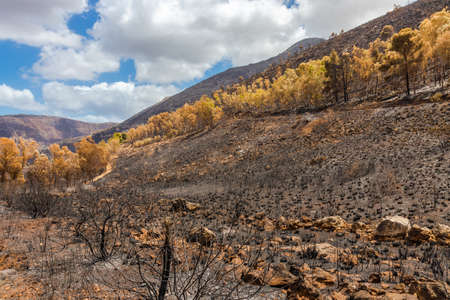 Scorched bushes and trees after fire in Sicily island, Italy