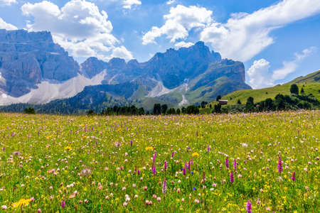 Beautiful flowering alpine meadow in the foreground and Italian Dolomites in the background.  Italian Alps, Corvara in Badia.