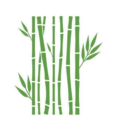 Vector illustration of the bamboo