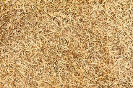 Texture hay closeup in color. Fodder for livestock and construction material. Imagens