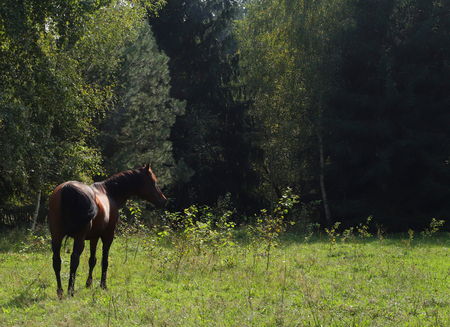 Polish wild horse in the bosom of nature