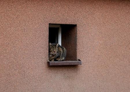 cat on the windowsill