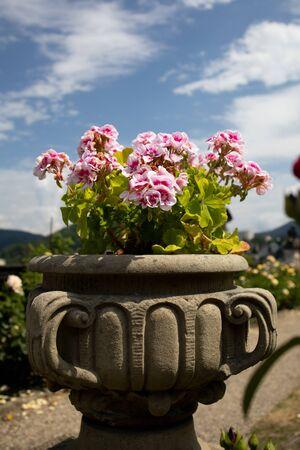 Castle in D???n, flowers in a pot Reklamní fotografie