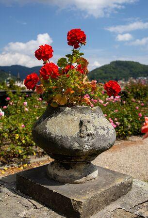 Castle in D???n, flowers in a pot