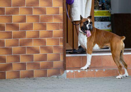 dog on street, man and his dog