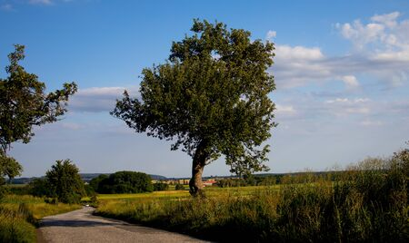 Tree in the field, Czech Republic, A winding road between fields in the Czech countryside Stock fotó