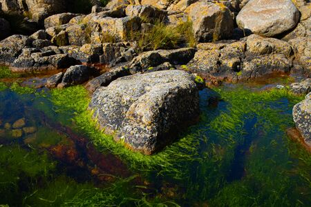 green-lined stone in the sea on the island of Bornholm